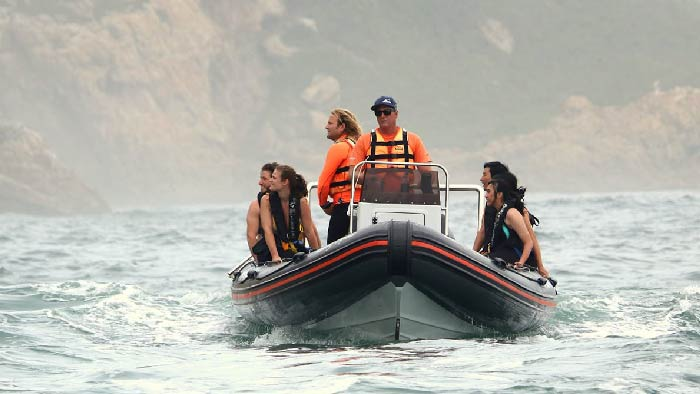Activities Plettenberg bay seal viewing boat trip