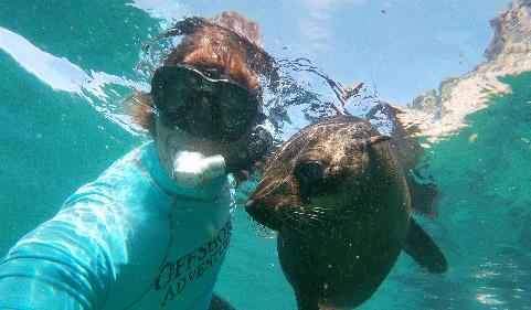 Activities Plettenberg bay swim with seals